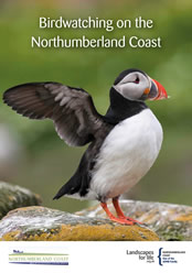 New bird watching guide for the coast